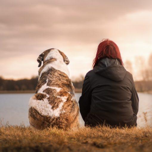 Pretparken waar honden zijn toegestaan